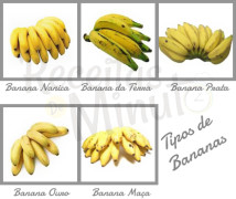tipos de banana 1