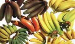 tipos de banana 4