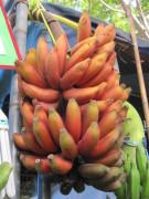 tipos de banana 5