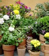 vasos para plantas 7