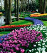 jardim com flores 1