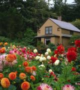 jardim com flores 4
