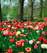 jardim com flores 6