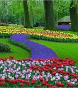 jardim com flores 7