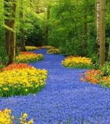 jardim com flores 9