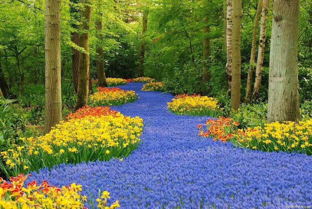 plantas jardim e flores:Jardim com flores – dicas e fotos dos mais lindos – Revista das