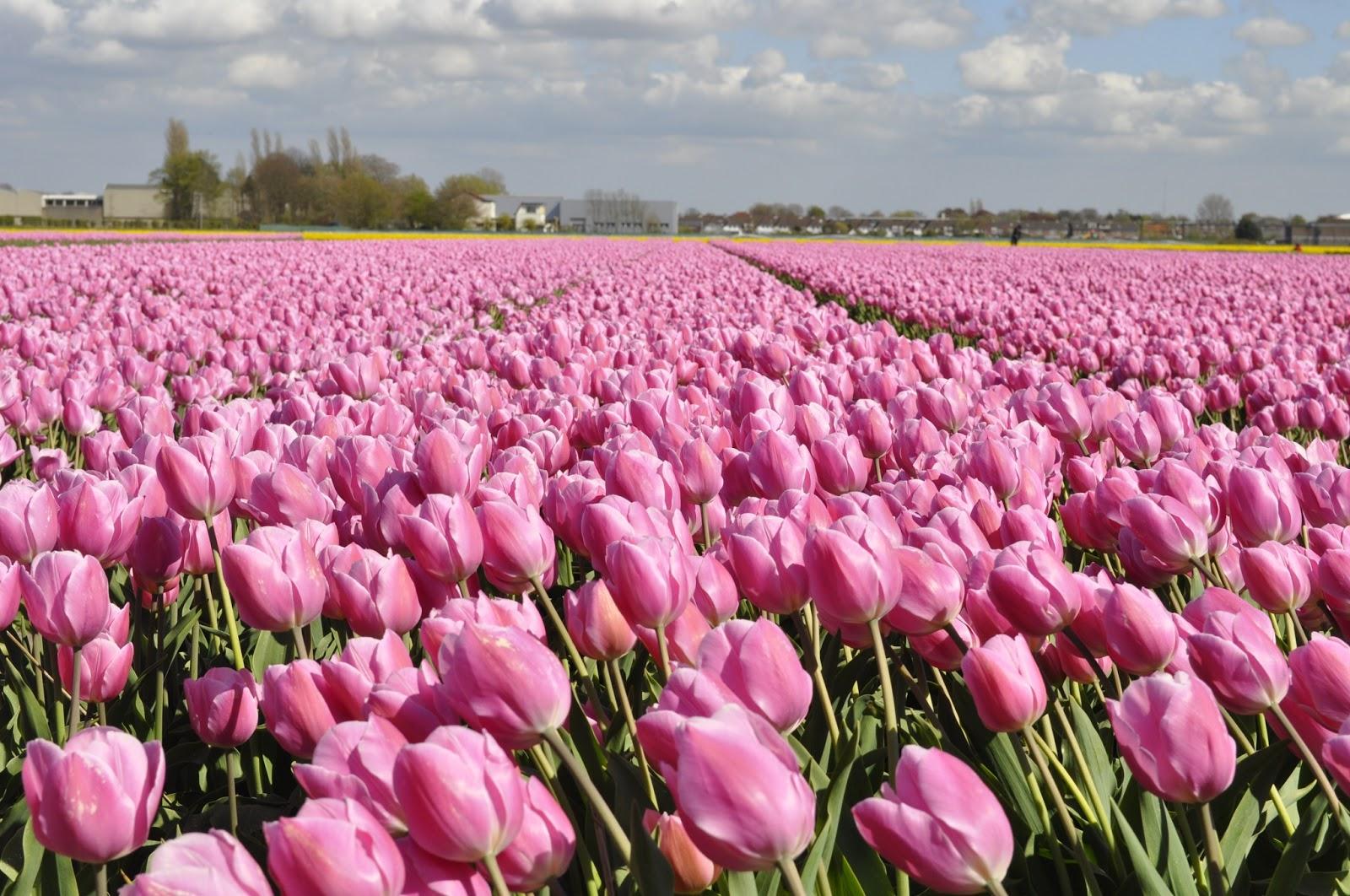 campo de flores belas