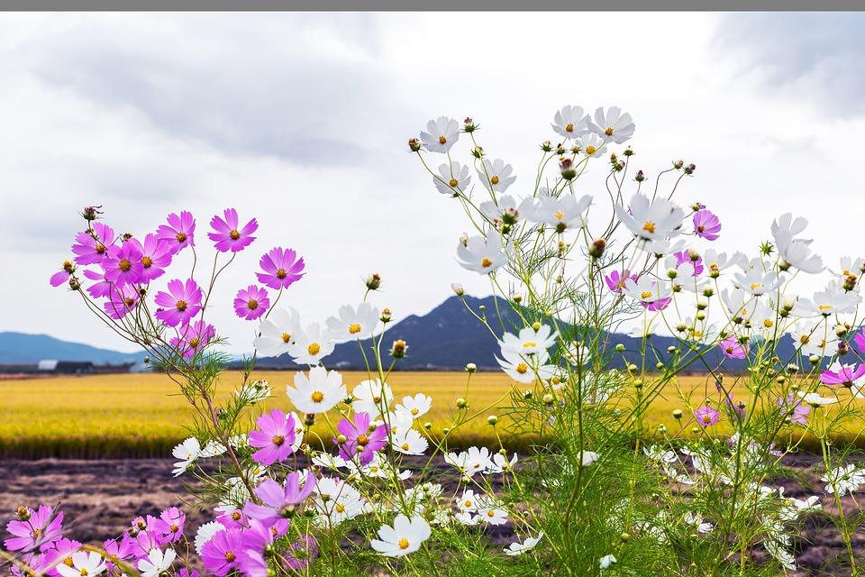 campo de flores delicadas