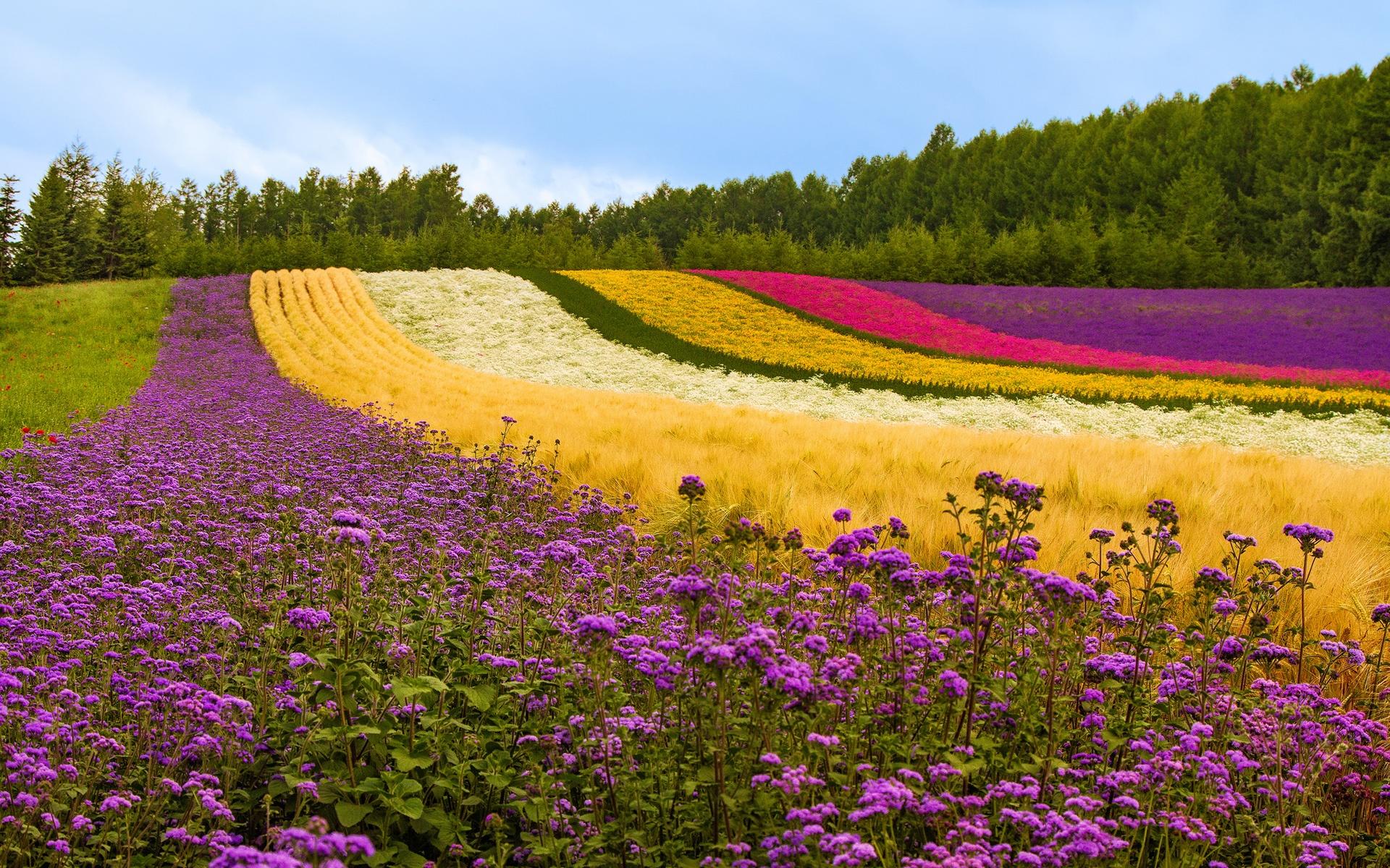 campo de flores diversas
