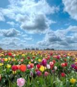 campo de flores lindas