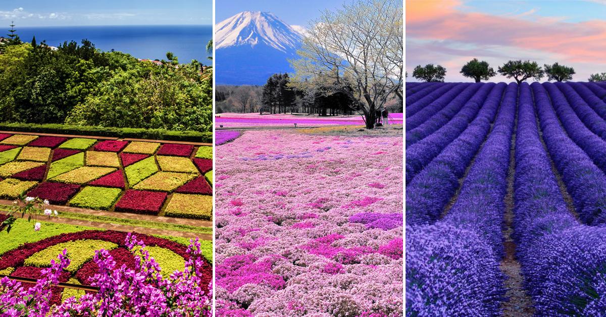 campo de flores planejadas