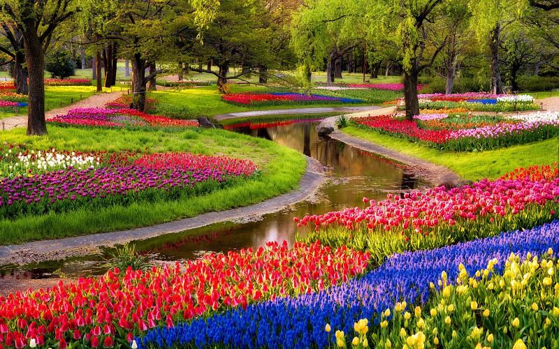 campo de flores tracado