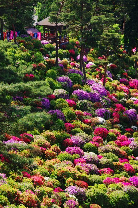 campo de flores variadas