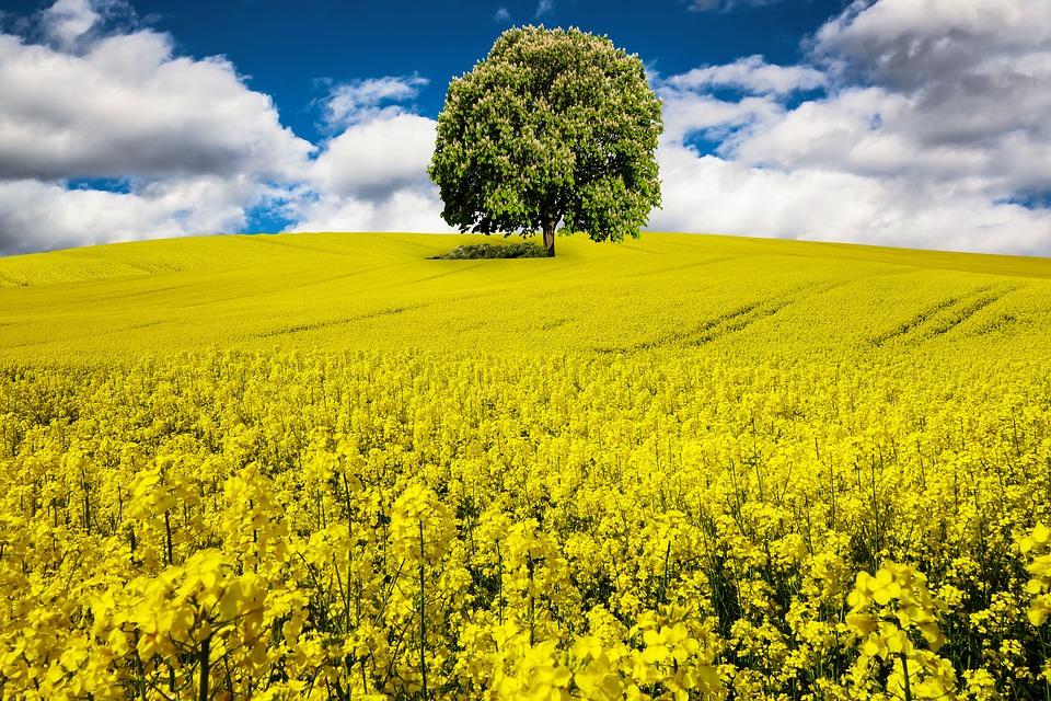 campo grane de flores